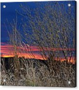 Weeds Can Be Pretty Acrylic Print