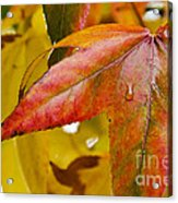 Weeping Red Leaf Acrylic Print
