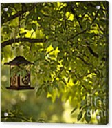 Welcome Feather Friends Acrylic Print