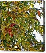 Welcome Sight Acrylic Print