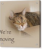 We're Moving Notification Greeting Card - Lily The Cat Acrylic Print