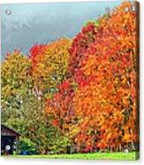 West Virginia Maples 2 Acrylic Print by Steve Harrington