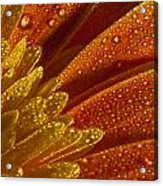 Wet Blumen Acrylic Print