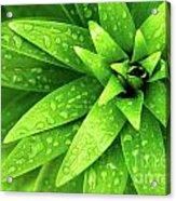 Wet Foliage Acrylic Print