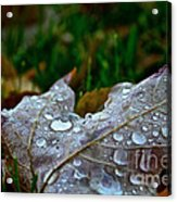 Wet Leaf Acrylic Print
