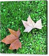 Wet Leaves On Grass Acrylic Print
