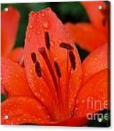 Wet On Red Acrylic Print