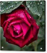Wet Weather Rose Acrylic Print