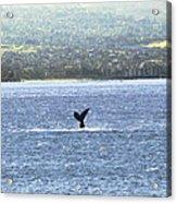 Whale Tail II Acrylic Print