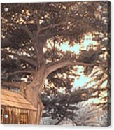 Whaler's Cabin Acrylic Print by Jane Linders