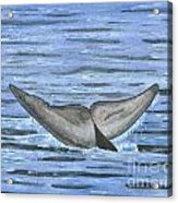 Whale's Tail Acrylic Print