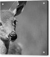 What A Face Acrylic Print