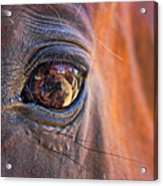 What Are You Looking At? Acrylic Print