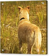 What Does Maisie See Acrylic Print