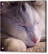 What Is A Cat Acrylic Print