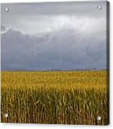 Wheat Field And Storm Acrylic Print