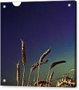 Wheat Field At Night Under The Moon Acrylic Print