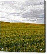 Wheat Field Homestead Acrylic Print