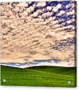 Wheat Field In The Palouse Acrylic Print