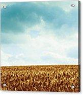 Wheatfield And Cloudy Sky Acrylic Print
