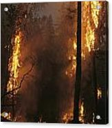When Flames Crown Into Treetops Acrylic Print
