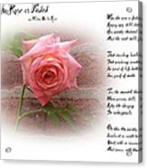 When The Rose Is Faded Acrylic Print