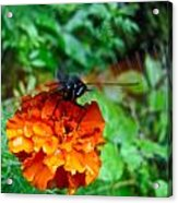 Whirl Wings Butterfly Acrylic Print