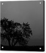 Whisper Of The Elm Acrylic Print