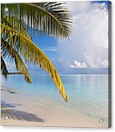 Whispering Palm On The Tropical Beach Acrylic Print