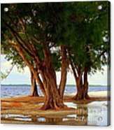 Whispering Trees Of Sanibel Acrylic Print by Karen Wiles