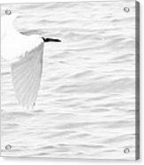 Whispering White Acrylic Print