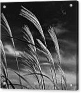Whispering Wind Acrylic Print by Dan Crosby
