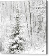 Whispers The Snow Acrylic Print