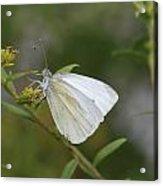 White Angel Acrylic Print
