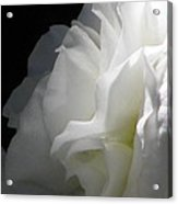 White Begonia I Acrylic Print