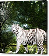 White Bengal Acrylic Print by Elizabeth Hart