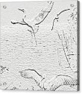 White Birds Acrylic Print