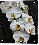 White Bliss Orchids Acrylic Print