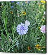 White Butterfly On Purple Flower Acrylic Print