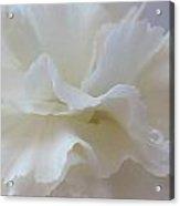 White Carnation Acrylic Print