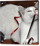 White Cat And Red Christmas Ribbon Acrylic Print