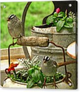 White Crowned Sparrows On The Flower Pot  Acrylic Print