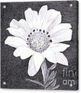 White Daisy Flower Acrylic Print