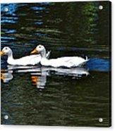 White Ducks At Sterne Park Acrylic Print