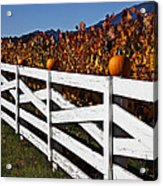 White Fence With Pumpkins Acrylic Print