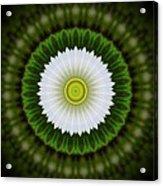 White Flower 2 Acrylic Print
