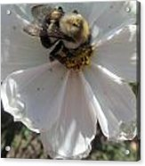 White Flower And Bee Acrylic Print