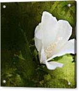 White Flower Texture Acrylic Print