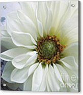 White Flower With Music Acrylic Print
