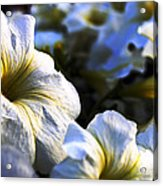 White Flowers At Dusk 2 Acrylic Print